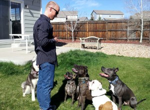 Brian Bergford Training Dogs